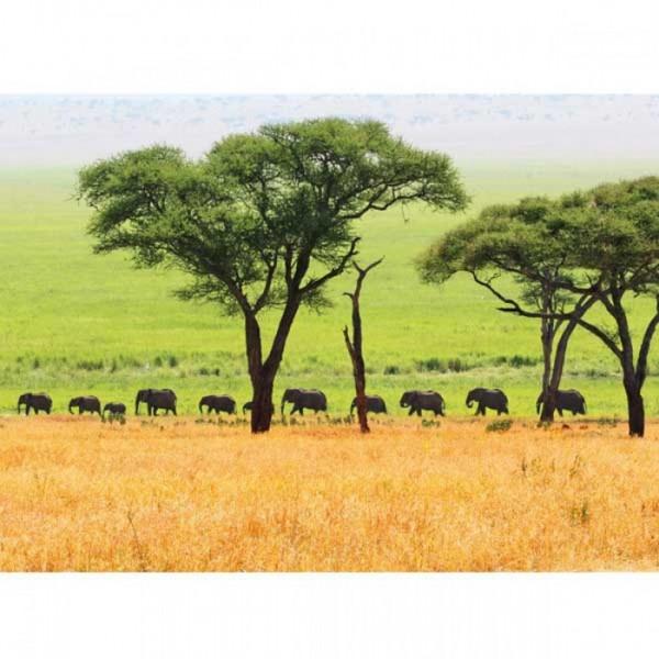 Postkarte Elefantenherde