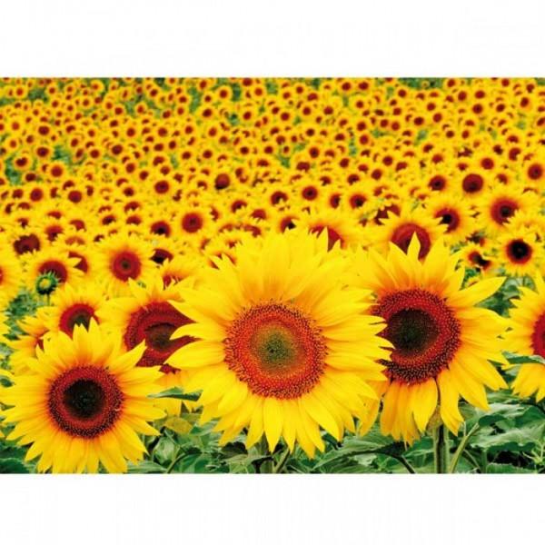 Postkarte Sonnenblumenfeld