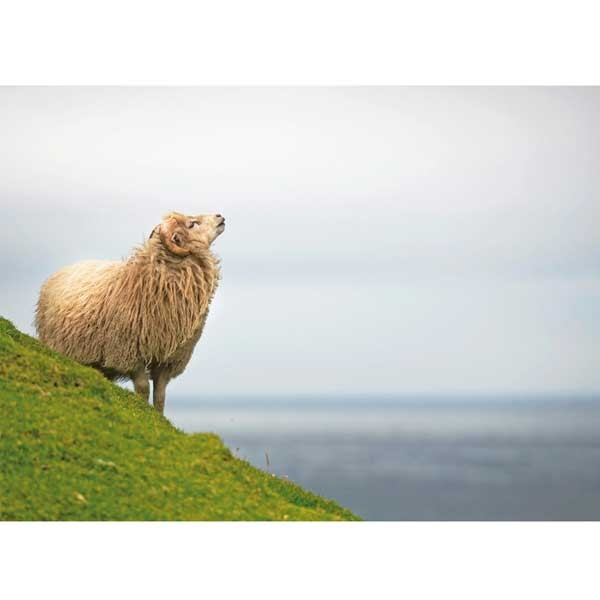 Postkarte Schaf am Meer