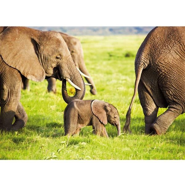Postkarte Elefanten im Amboseli-Nationalpark