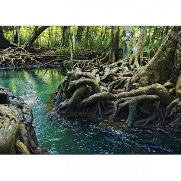 Grußkarte Mangrovenwald
