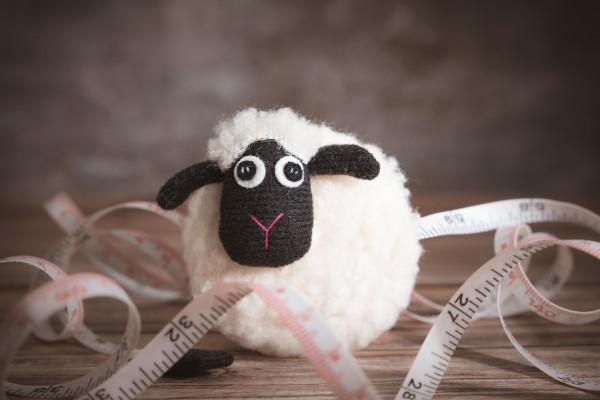 Maßband, Schaf
