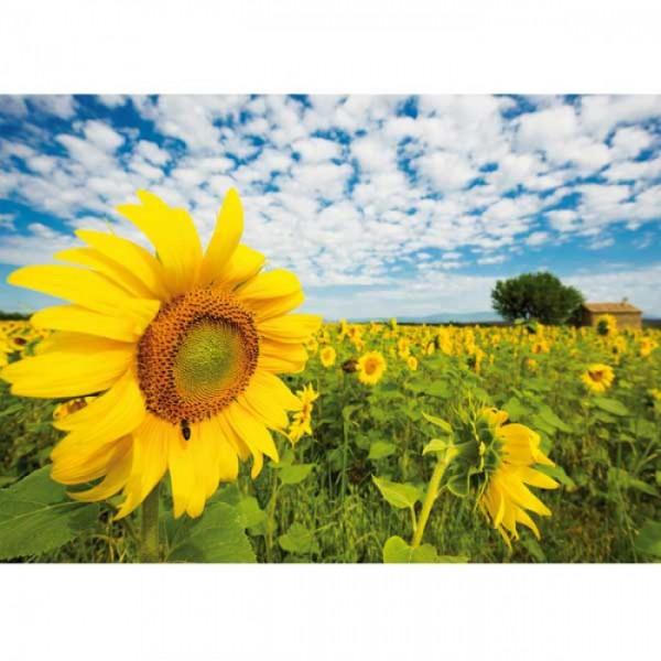 Grußkarte Sonnenblumenfeld