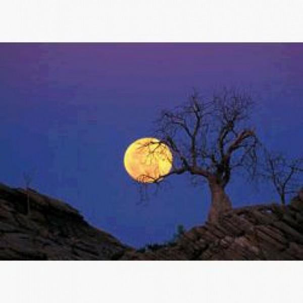 Postkarte Baobab