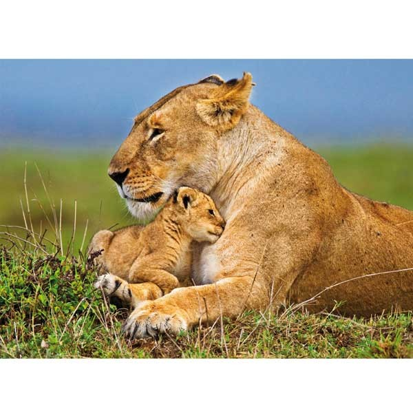 Postkarte Löwin mit Jungem