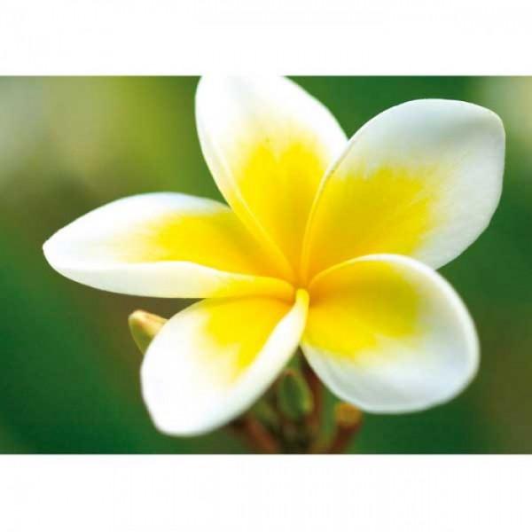 Grußkarte Blume